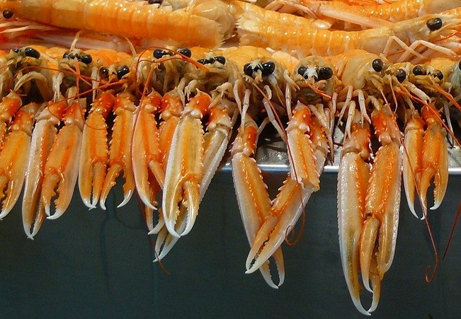 Seafood Exporters in India   Southland Impex
